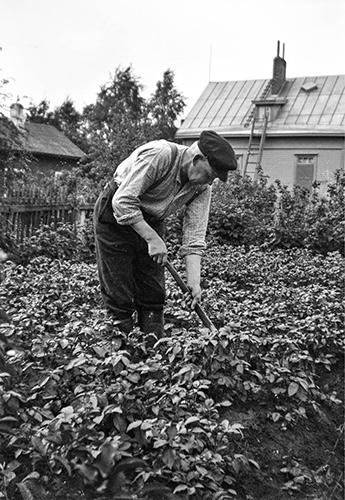Perunapellolla Jyväskylän Tourulassa vuonna 1939. Kuva: Keski-Suomen museo.