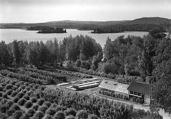 Keski-Suomen kotitalousopiston (myöh. Keski-Suomen kotitalousopettajaopiston) puutarhaa 1940-luvulla. Kuva: Aarne Pietisen valokuvaamo / Keski-Suomen museo.