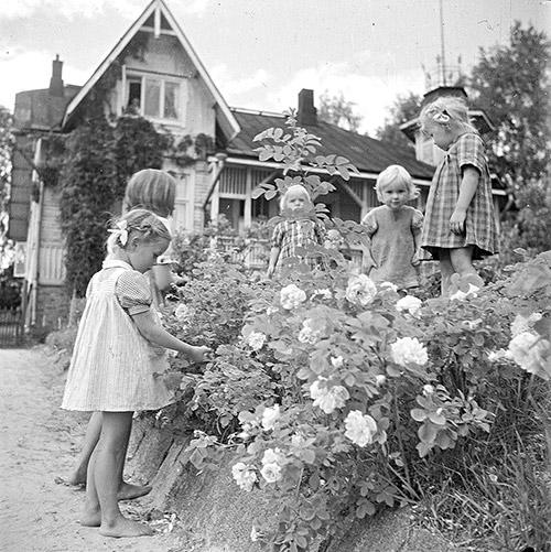 Ruusupensaat kiinnostivat pikkutyttöjä Jyväskylän Vapaudenkatu 27:n edustalla vuonna 1948. Kuva: Kauko Kippo, Keski-Suomen Ilmavoimamuseo / Keski-Suomen museo.