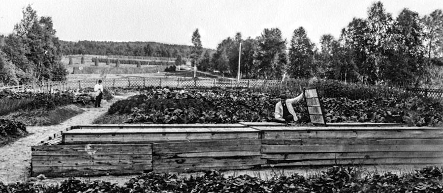 Jyväskylän Paloniemen huvilan hyötypuutarha 1900-luvun alussa. Kuva: Anton Fredrikson / Keski-Suomen museo.