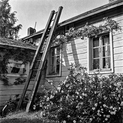 Jyväskylän Vaasankatu 27:ssä sijainneen asuintalon seinustoja koristivat villiviiniköynnös ja ruusupensas vuonna 1951. Kuva: Pekka Kyytinen / Keski-Suomen museo.
