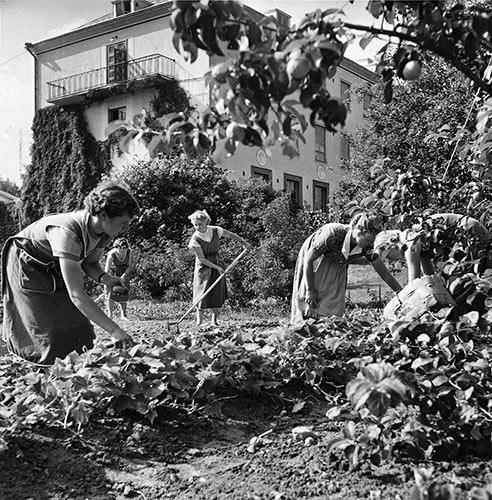 Keski-Suomen kotitalousopettajaopiston oppilaita puutarhatöissä 1950-luvulla. Kuva: Kauko Kippo / Keski-Suomen museo.
