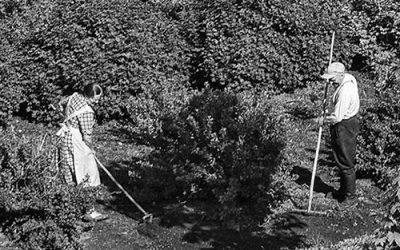 Kun Martta perustaa puutarhan