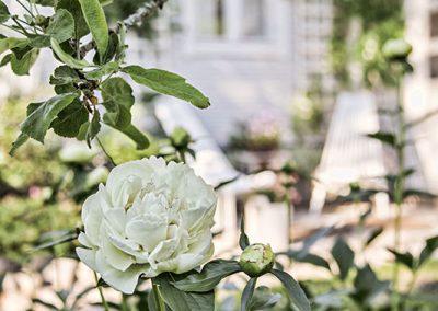 Katin ja Tuomaksen puutarha: kiveä, kasveja ja kauniita esineitä